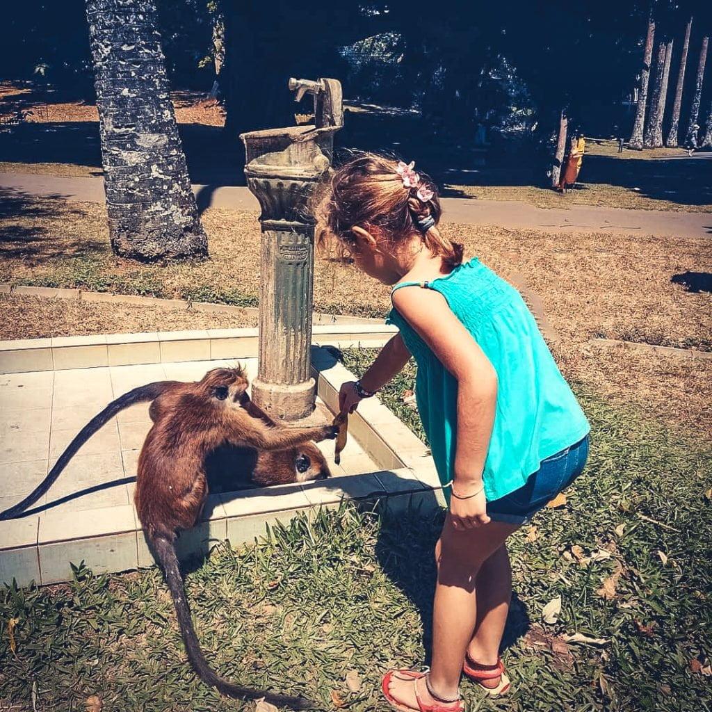 Bianca gioca con una scimmia